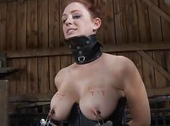 Hard teasing for beautys nipps bald bawdy cleft