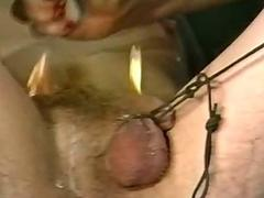 Mistress pulls on guys his coupled with balls coupled with burns pubic hair wi